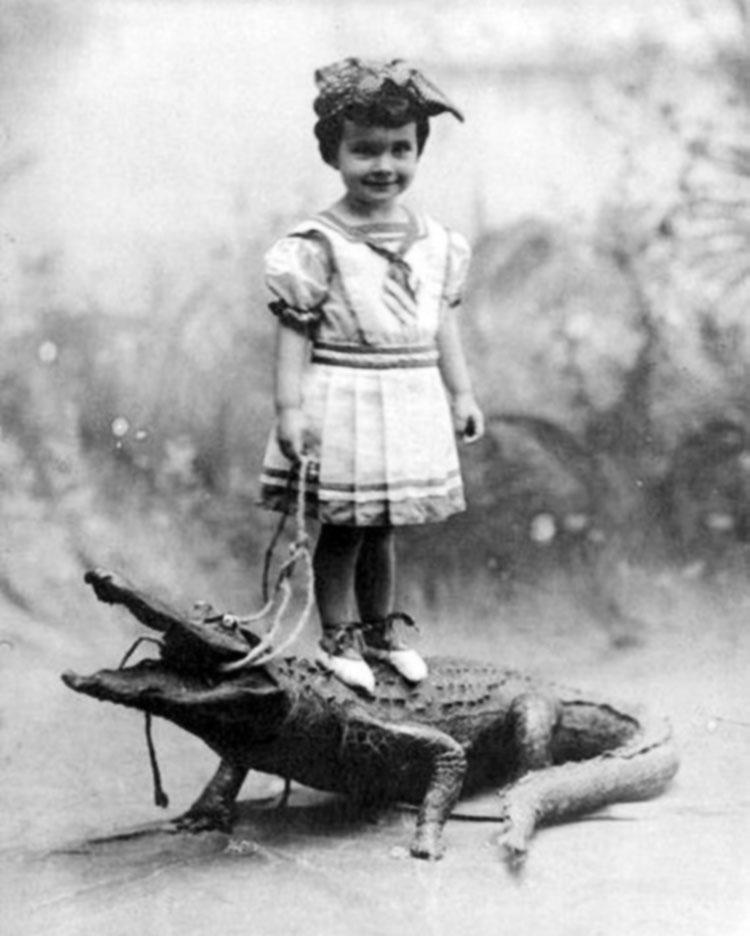 photo ancienne bizarre crocodile