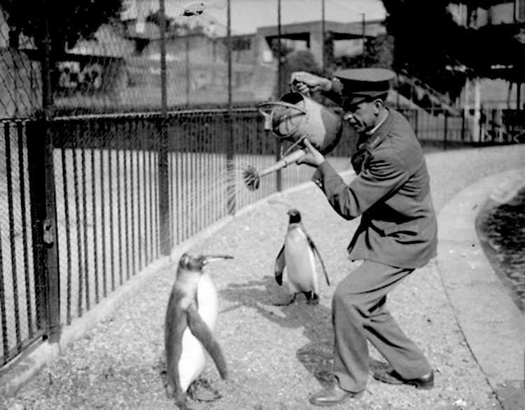 photo ancienne bizarre pingouin