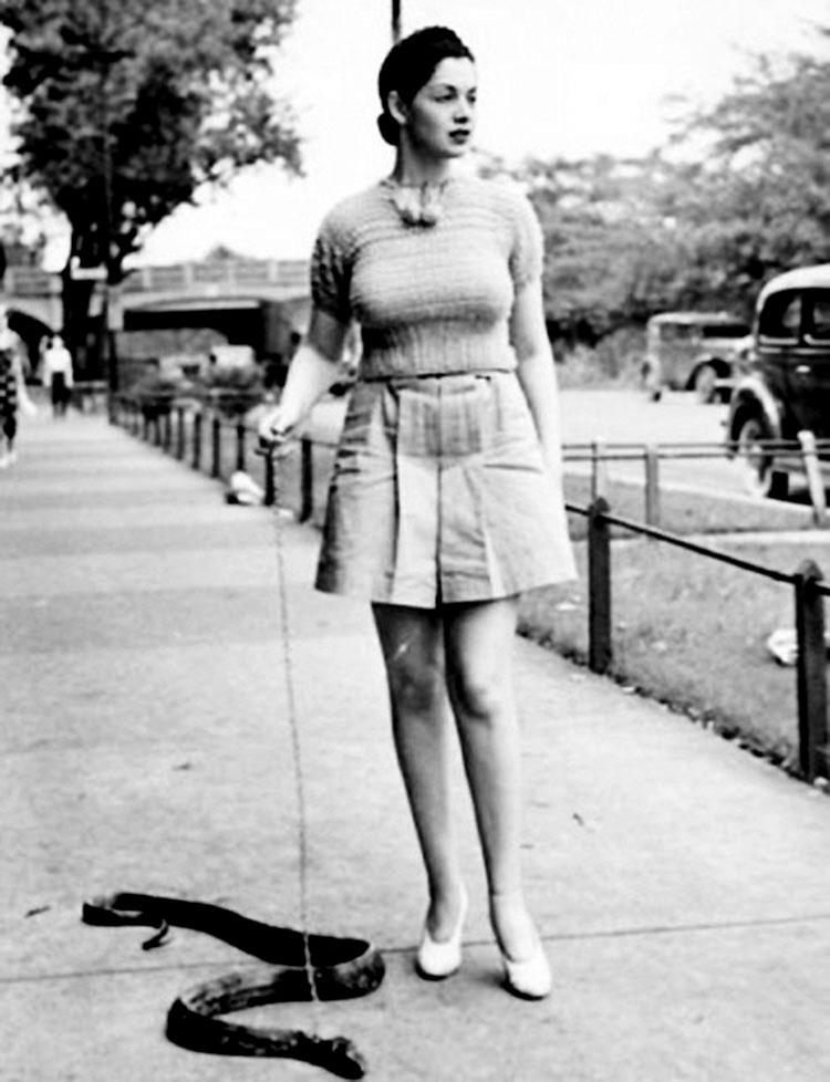 photo ancienne bizarre serpent