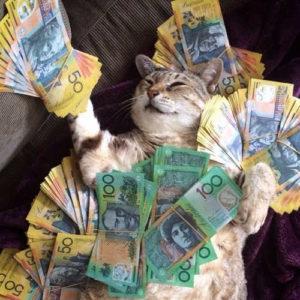 photo-de-chat-argent